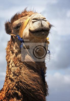Cuadro camello