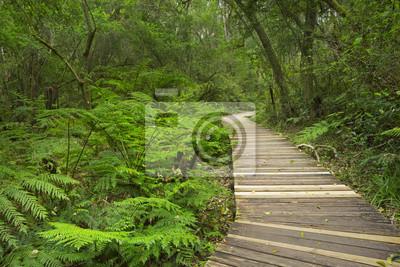 Camino a través de la selva tropical en la Ruta del Jardín NP, Sudáfrica