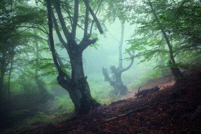 Cuadro Camino a través de un misterioso bosque oscuro viejo en la niebla. Otoño