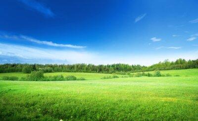 Cuadro campo de hierba y cielo perfecto