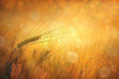 Cuadro Campo de trigo soleado campo de la fantasía de antecedentes