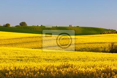 Campos de amarillo