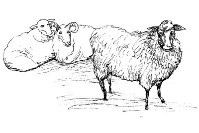 Cuadro Carnero y oveja