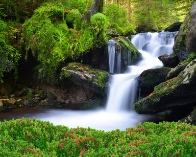 Cuadro Cascada en el Parque Nacional de Sumava-República Checa