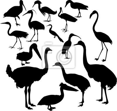 catorce colección de siluetas de aves diferentes