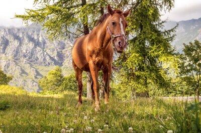 Cuadro Cavallo pascolo
