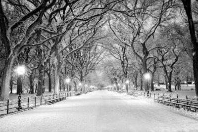 Cuadro Central Park, Nueva York cubierto de nieve en la madrugada