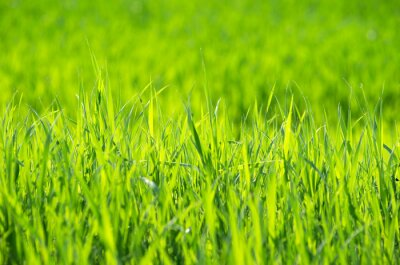 Cuadro Césped verde