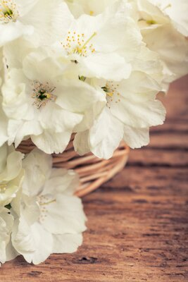 Cuadro Cierre de cerezo en flor blanca en una cesta en estilo vintage