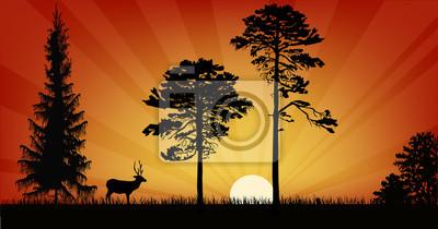 ciervos individuales y tres árboles al atardecer