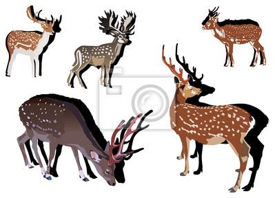 cinco ciervos de Sika con sombras