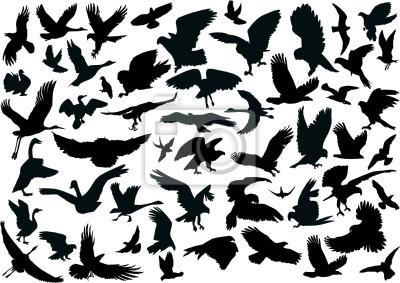 cincuenta siluetas de cuatro aves