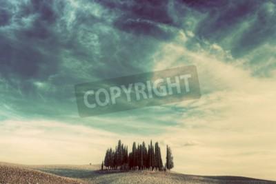 Cuadro Cipreses en el campo en Toscana, Italia al atardecer. Paisaje toscano en el estado de ánimo vintage, retro