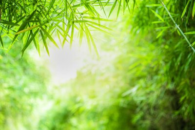 Cuadro Closeup beautiful view of nature green bamboo leaf on greenery blurred background with sunlight and copy space. It is use for natural ecology summer background and fresh wallpaper concept.
