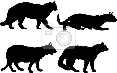 colección cuatro gatos aislados