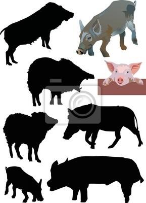 colección de cerdos