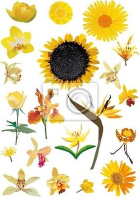 Colección de flores amarillas aisladas en blanco
