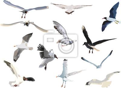 colección de gaviotas en el fondo blanco