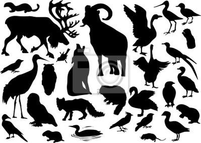 Colección de los animales polares aislados en blanco