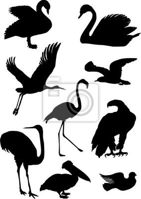 colección de siluetas de aves