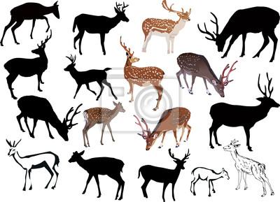 colección diecisiete ciervos