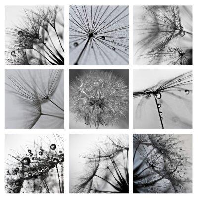 Cuadro Collage ze zdjęć makro Wielkiego dmuchawca