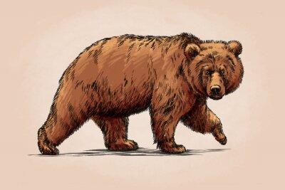 Cuadro Color grabar aislado grizzly