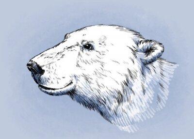 Cuadro Color grabar aislado vector oso