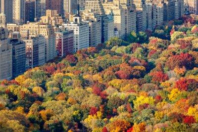 Cuadro Colores brillantes de la caída de Central Park follaje en la tarde. Vista aérea hacia Central Park West. Upper West Side, Manhattan, Ciudad de Nueva York