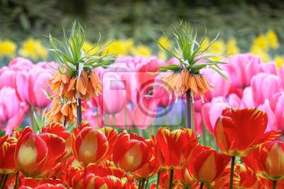 Colorido jardín de primavera con tulipanes rojos, rosados, anaranjados y amarillos