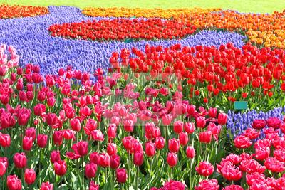 Coloridos tulipanes Jardín Patchwork