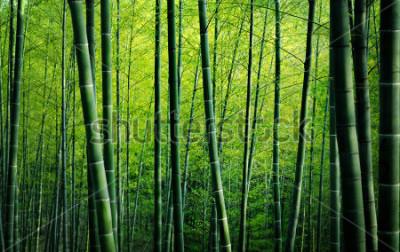 Cuadro Concepto de naturaleza de árboles de bambú de bosque