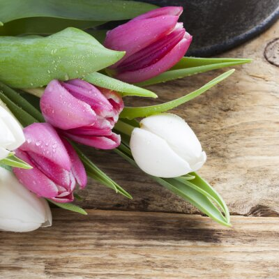 Cuadro Concepto de primavera tulipán púrpura en la bandeja de la vendimia y mesa de madera