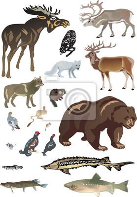 conjunto de animales polares