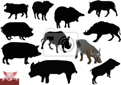 conjunto de cerdos