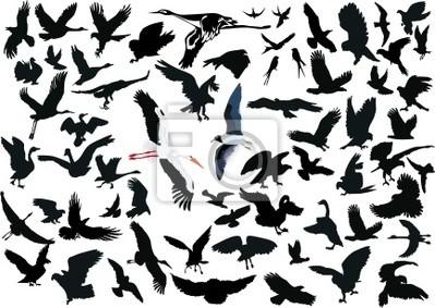 Conjunto de diferentes aves en vuelo