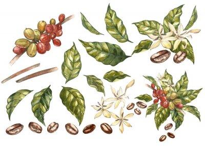 Cuadro Conjunto de granos rojos del arábica del café en la ramificación con las flores aisladas, ejemplo de la acuarela.