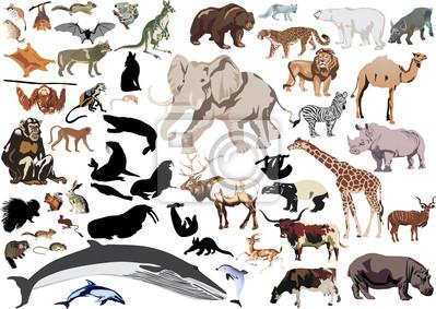 conjunto de mamíferos silvestres aisladas en blanco