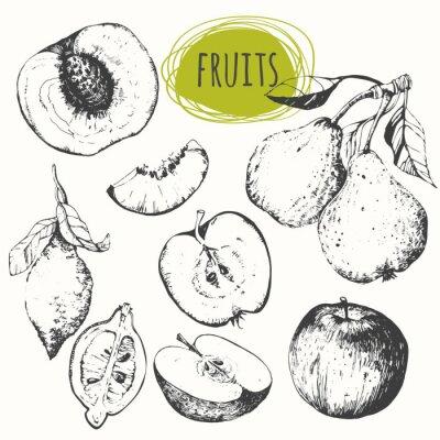 Cuadro Conjunto de manzana dibujado a mano, limón, pera, melocotón. Bosquejo de frutas.