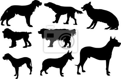 conjunto de ocho perros aislados