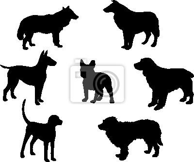 conjunto de siete perros