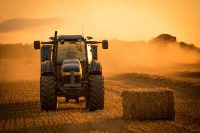 Cuadro Cosecha de la puesta del sol del tractor