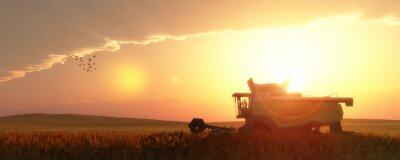 Cuadro cosechadora de trigo