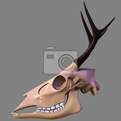 Cráneo de venado pinturas para la pared • cuadros hueso, veterinario ...
