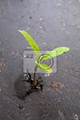 Creciendo brotes verdes en el asfalto