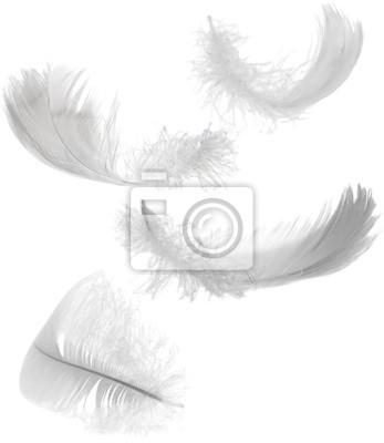 Cuadro cuatro plumas blancas