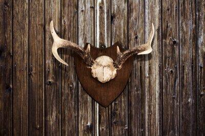 Cuadro Cuernos en una pared de madera