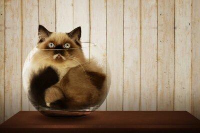Cuadro Cute persian cat inside glass bowl