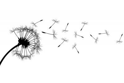 Cuadro Dandelion silhouette