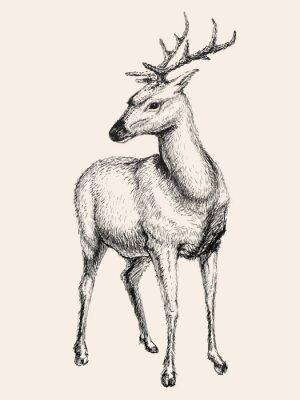 Cuadro Deer ilustración vectorial, dibujado a mano, dibujo